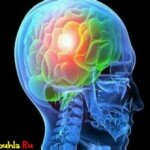 Человеческий мозг! Тайна?