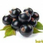Лечебные свойства чёрной смородины