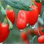 Коктейль ягоды годжи и клюквы для похудения