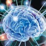 Монастырский чай для улучшения работы мозга и памяти
